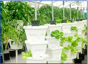 Hydroponics Community Farms